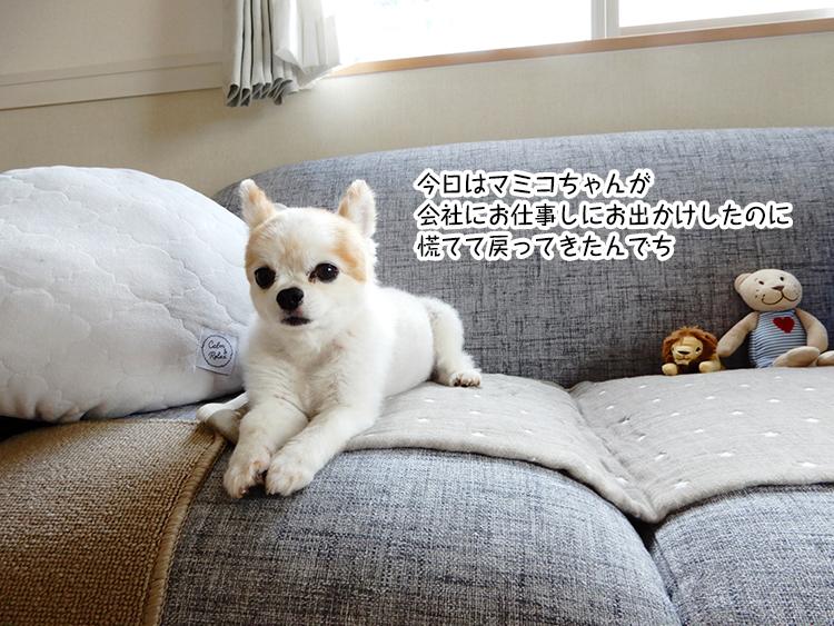 今日はマミコちゃんが会社にお仕事しにお出かけしたのに慌てて戻ってきたんでち