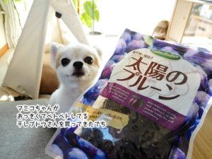 マミコちゃんが おっきくてベトベトしてる 干しブドウさんを買ってきたでち