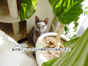 こんいちは。我が家のジャングルの隙間からご挨拶ですよ。