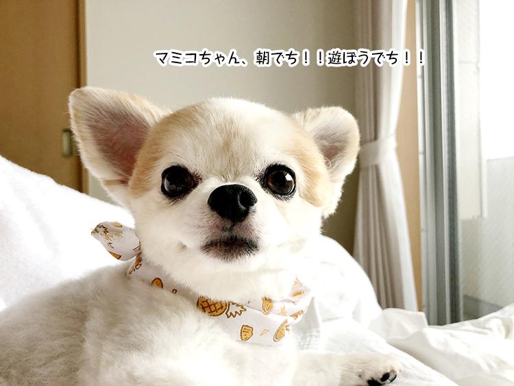 マミコちゃん、朝でち!!遊ぼうでち!!