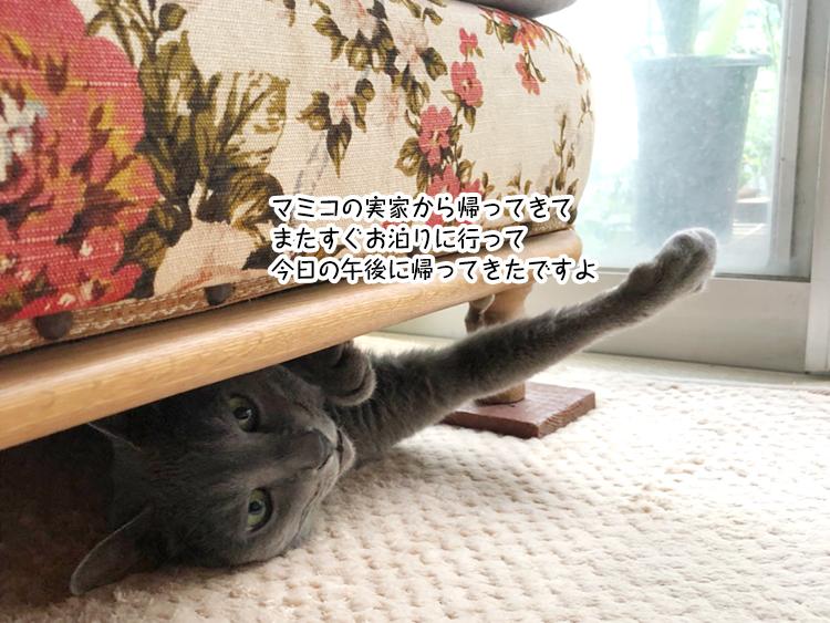 マミコの実家から帰ってきて またすぐお泊りに行って 今日の午後に帰ってきたですよ
