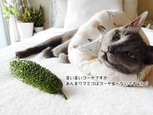 苦い苦いゴーヤですか… あんまりマミコはゴーヤ食べないですよね?