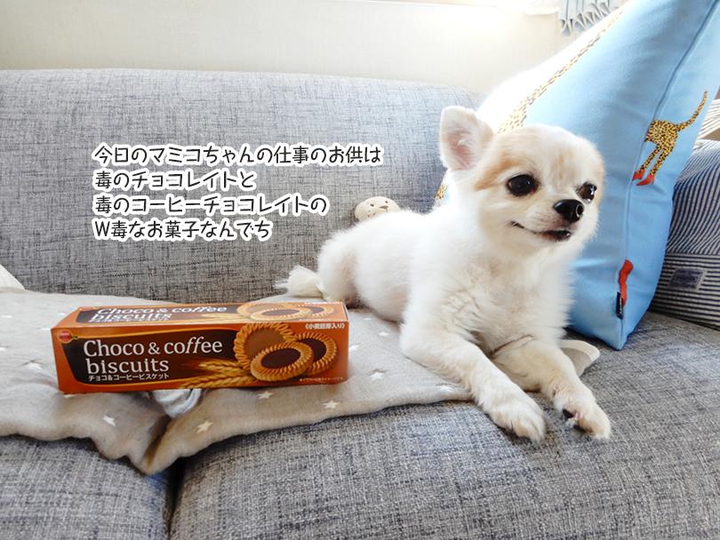 今日のマミコちゃんの仕事のお供は毒のチョコレイト 毒コーヒーチョコレイトのW毒なお菓子なんでち