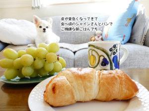 皮が黄色くなってきて 食べ頃のシャインさんとパンで ご機嫌な朝ごはんでちー