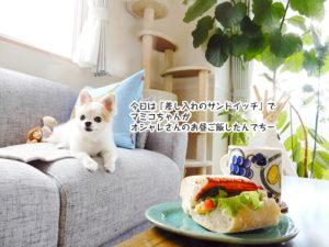 今日は「差し入れのサンドイッチ」で マミコちゃんが オシャレさんのお昼ご飯したんでちー