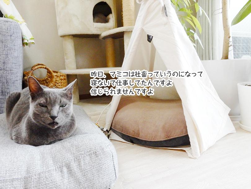 昨日、マミコは社畜っていうのになって寝ないで仕事してたんですよ。信じられませんですよ