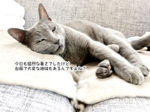 今日も猛烈な暑さでしたけど 台風で大変な地域もあるんですよね?