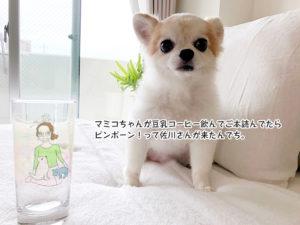 マミコちゃんが豆乳コーヒー飲んでご本読んでたら ピンポーン!って佐川さんが来たんでち。