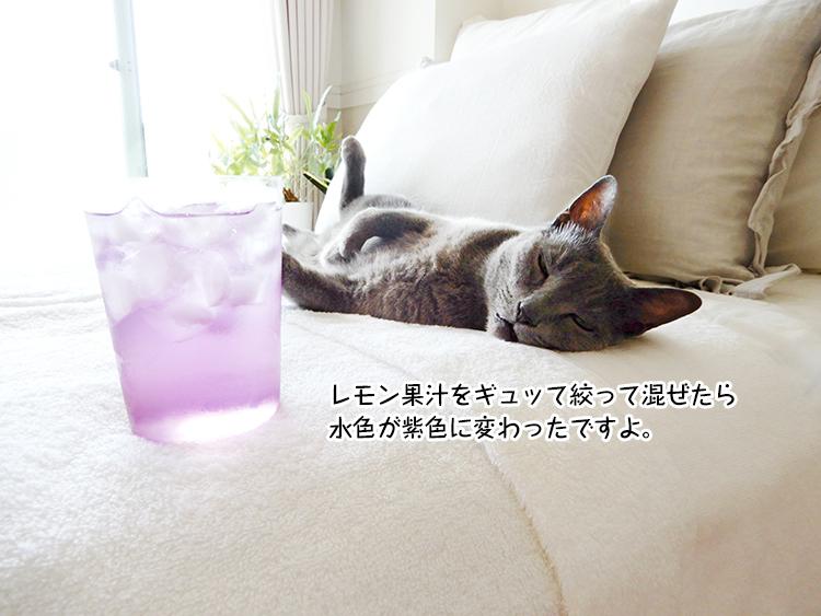 レモン果汁をギュッて絞って混ぜたら 水色が紫色に変わったですよ。