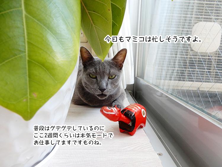 今日もマミコは忙しそうですよ。