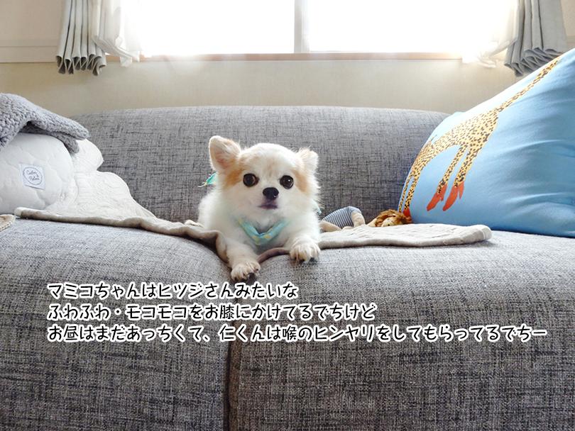 マミコちゃんはヒツジさんみたいな ふわふわ・モコモコをお膝にかけてるでちけど お昼はまだあっちくて、仁くんは喉のヒンヤリをしてもらってるでち-