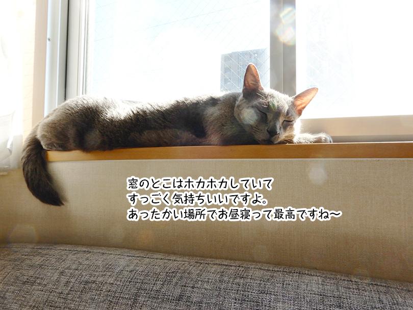 窓のとこはホカホカしていて すっごく気持ちいいですよ。 あったかい場所でお昼寝って最高ですね~