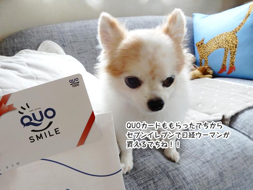 QUOカードももらったでちから セブンイレブンで日経ウーマンが 買えるでちね!!