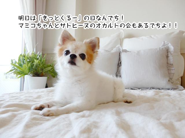 明日は「きっとくるー」の日なんでち! マミコちゃんとサトヒーヌのオカルトの会もあるでちよ!!