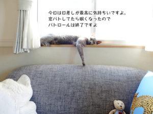 今日は日差しが最高に気持ちいですよ。 窓パトしてたら眠くなったので パトロールは終了ですよ