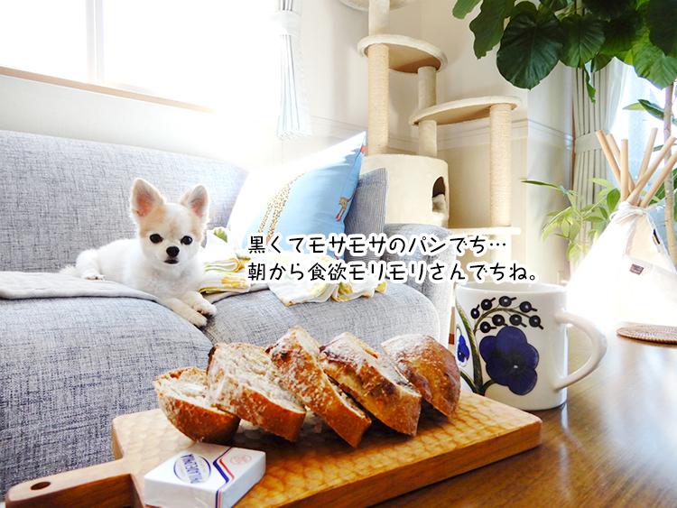 黒くてモサモサのパンでち…朝から食欲モリモリさんでちね。
