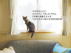 今日はほんとに ホカホカしてましたですよ。 Z空調な斎藤工さんが 今日も窓から見える平和な我が家です。