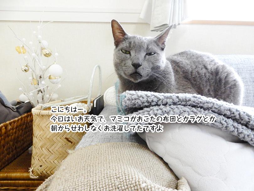 こにちはー。 今日はいお天気で、マミコがおこたの布団とかラグとか 朝からせわしなくお洗濯してたですよ