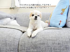 マミコちゃんの顔の真似してるでち! メメがこんな風になってるでち!!
