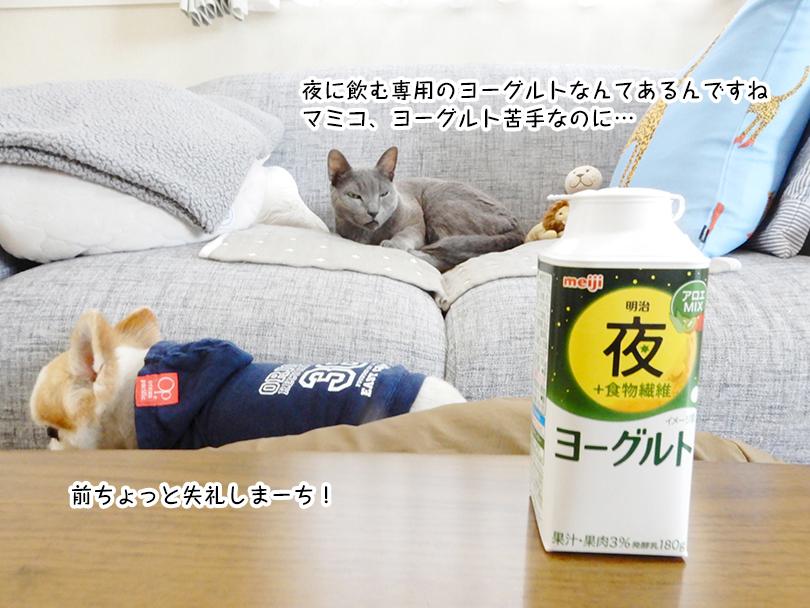 夜に飲む専用のヨーグルトなんてあるんですね。マミコ、ヨーグルト苦手なのに…