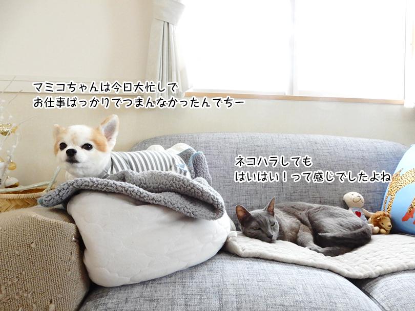 マミコちゃんは今日大忙しで お仕事ばっかりでつまんなかったんでちー