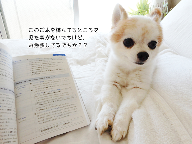 このご本を読んでるところを 見た事がないでちけど、 お勉強してるでちか??