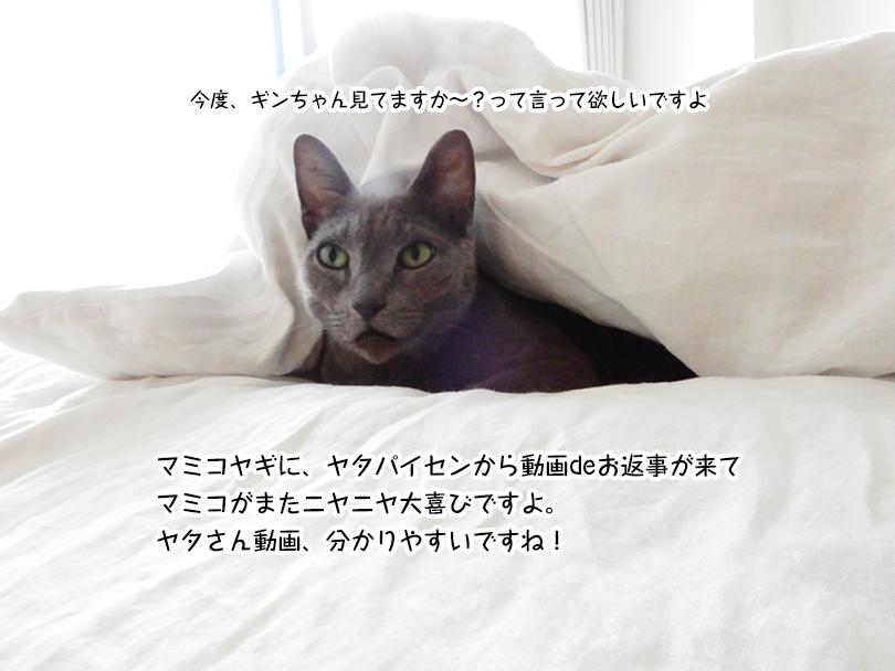 マミコヤギに、ヤタパイセンから動画deお返事が来て マミコがまたニヤニヤ大喜びですよ。 ヤタさん動画、分かりやすいですね!