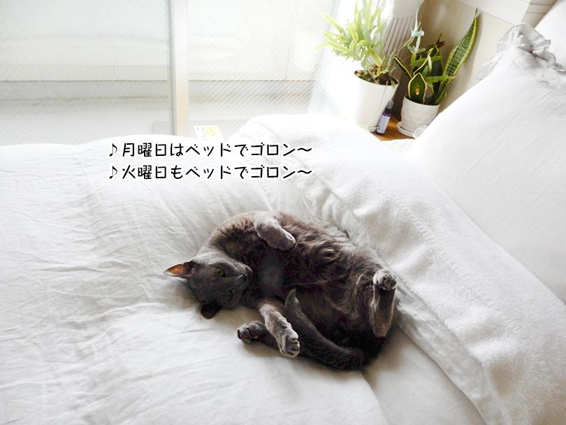 ♪月曜日はベッドでゴロン~ ♪火曜日もベッドでゴロン~