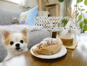 カリカリなのにフワッとしてて バナナがヌタッとしてる 不思議食感のパンを マミコちゃんが朝ごはんに食べるでちー