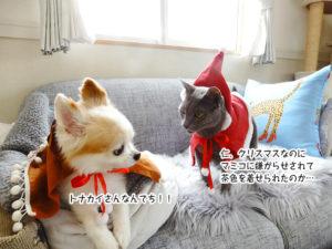 仁、クリスマスなのに マミコに嫌がらせされて 茶色を着せられたのか…