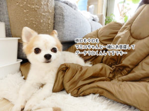 昨日も今日も マミコちゃんと一緒にお昼寝して グータラ仁くんしてるでちー