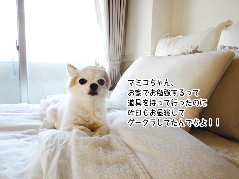 マミコちゃん、 お家でお勉強するって 道具を持って行ったのに 昨日もお昼寝して グータラしてたんでちよ!!