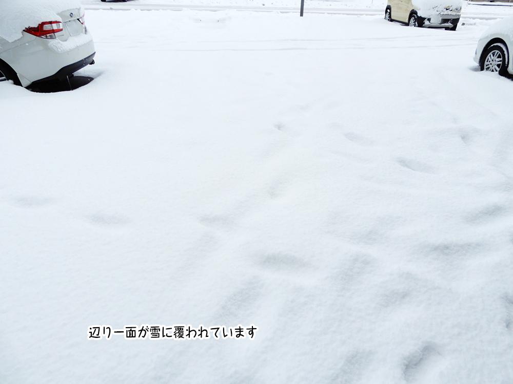 辺り一面が雪に覆われています