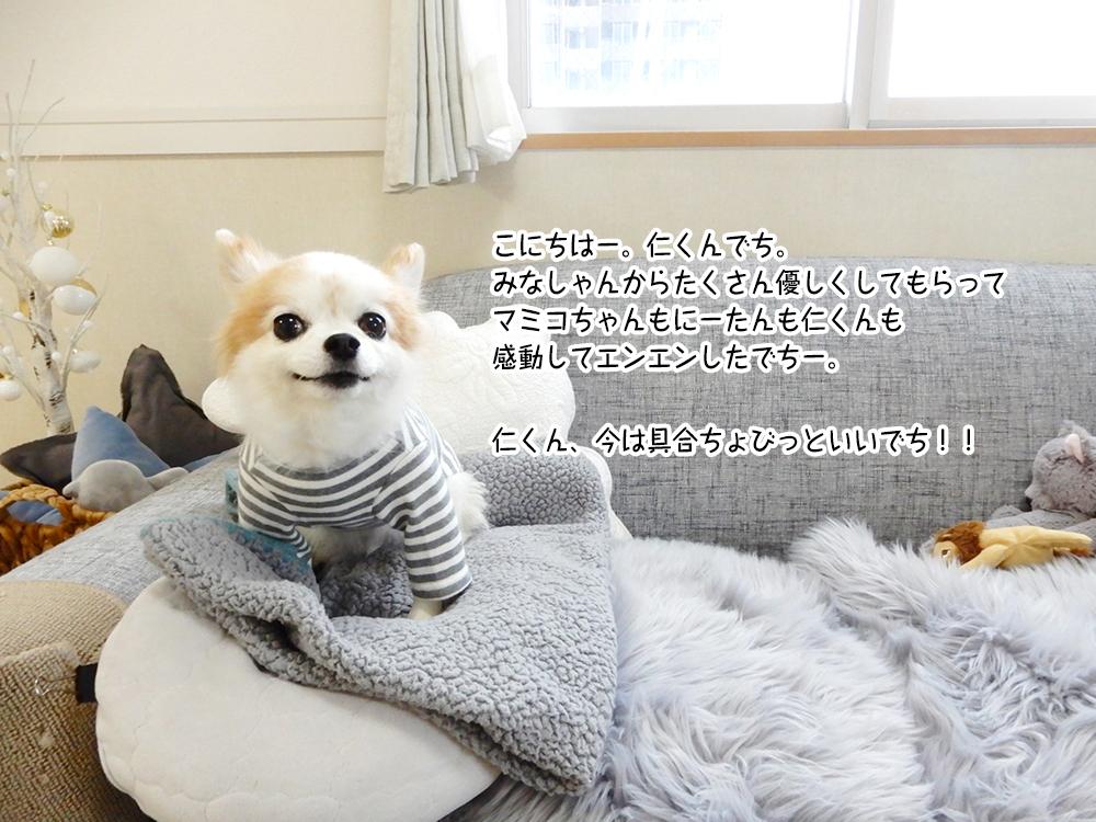 こにちはー。仁くんでち。 みなしゃんからたくさん優しくしてもらって マミコちゃんもにーたんも仁くんも 感動してエンエンしたでちー。