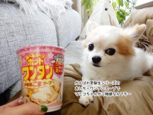 がんばれ受験生シリーズの おいちーワンタンスープで マミコちゃんがご機嫌なんでちー