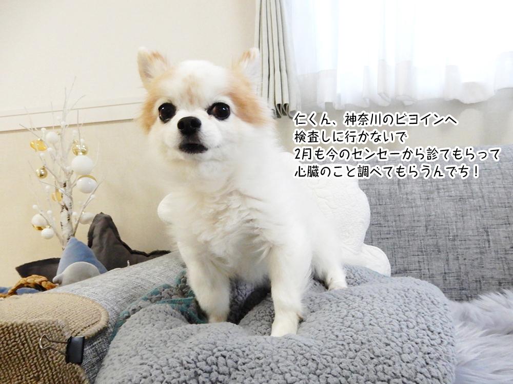 仁くん、神奈川のビヨインへ 検査しに行かないで 2月も今のセンセーから診てもらって 心臓のこと調べてもらうんでち!