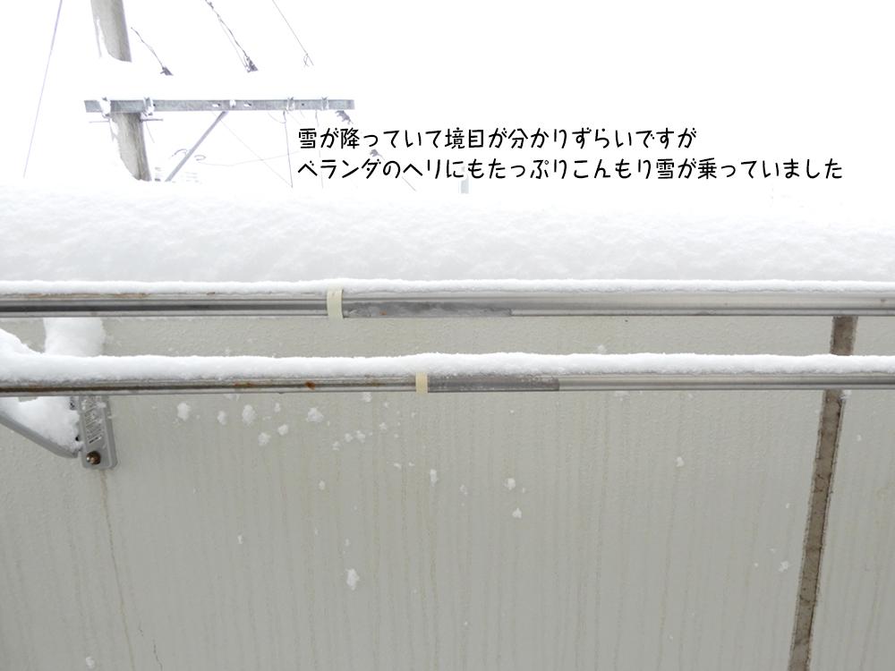雪が降っていて境目が分かりずらいですが ベランダのヘリにもたっぷりこんもり雪が乗っていました