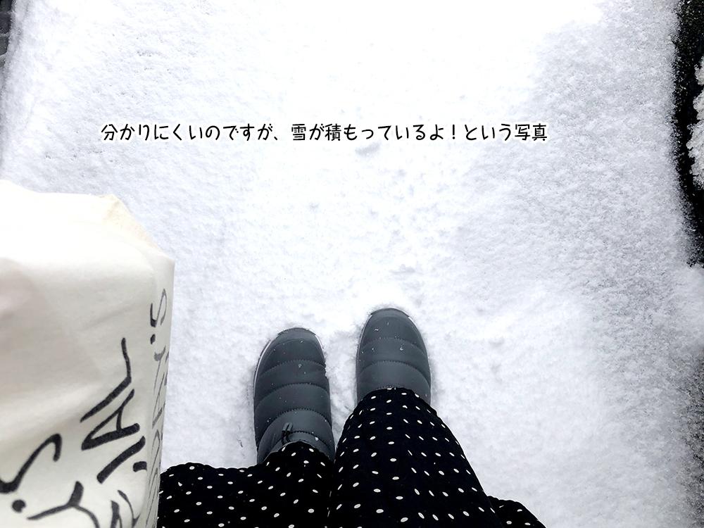 分かりにくいのですが、雪が積もっているよ!という写真