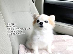 こにちはー。 3個前の日に マミコちゃんのお車に乗って 仁くんのビヨインに 行ってきたでちよーー