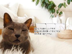 暦の上では春らしいですが 新潟はまた雪が降ってきたですよ。 まだ冬真っ盛りですよ。