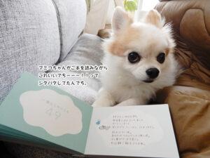 マミコちゃんがご本を読みながら これいいでちーーー!!って ジタバタしてたんでち。
