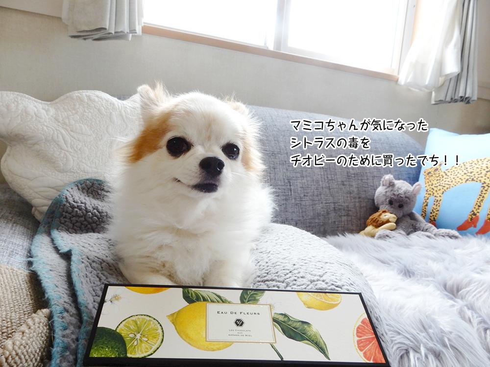 マミコちゃんが気になった シトラスの毒を チオビーのために買ったでち!!