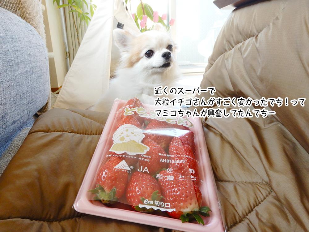 近くのスーパーで 大粒イチゴさんがすごく安かったでち!って マミコちゃんが興奮してたんでちー
