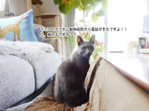マミコのスマホに動物病院から電話がきたですよ!! 仁、帰れるですか??