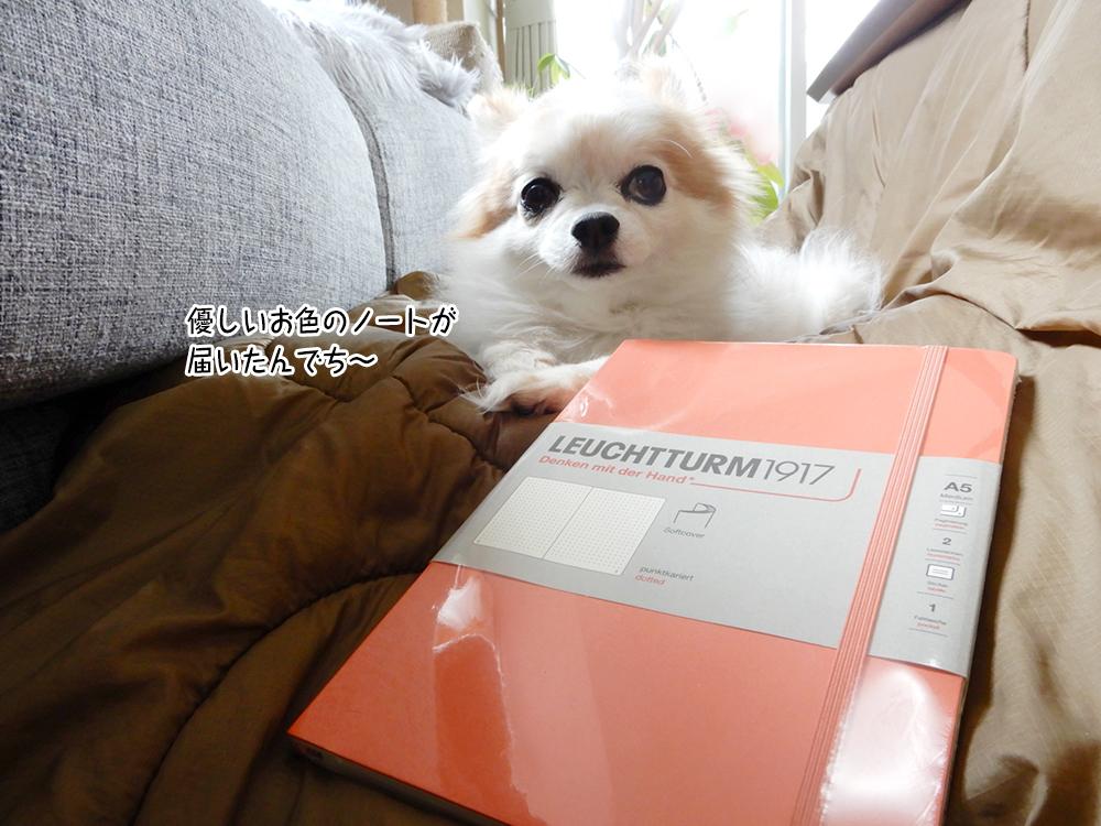 優しいお色のノートが 届いたんでち~