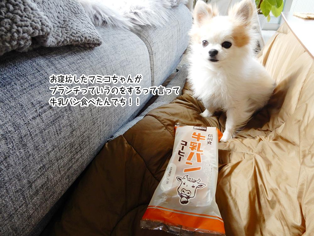 お寝坊したマミコちゃんが ブランチっていうのをするって言って 牛乳パン食べたんでち!!