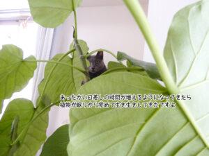 あったかい日差しの時間が増えるようになってきたら 植物が眠りから覚めて生き生きしてきたですよ