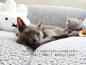 昨日の夜、マミコの妹のミヨキちゃんが泊まりに来て 仁のやつが嬉しくて興奮して、寝不足なんですよね