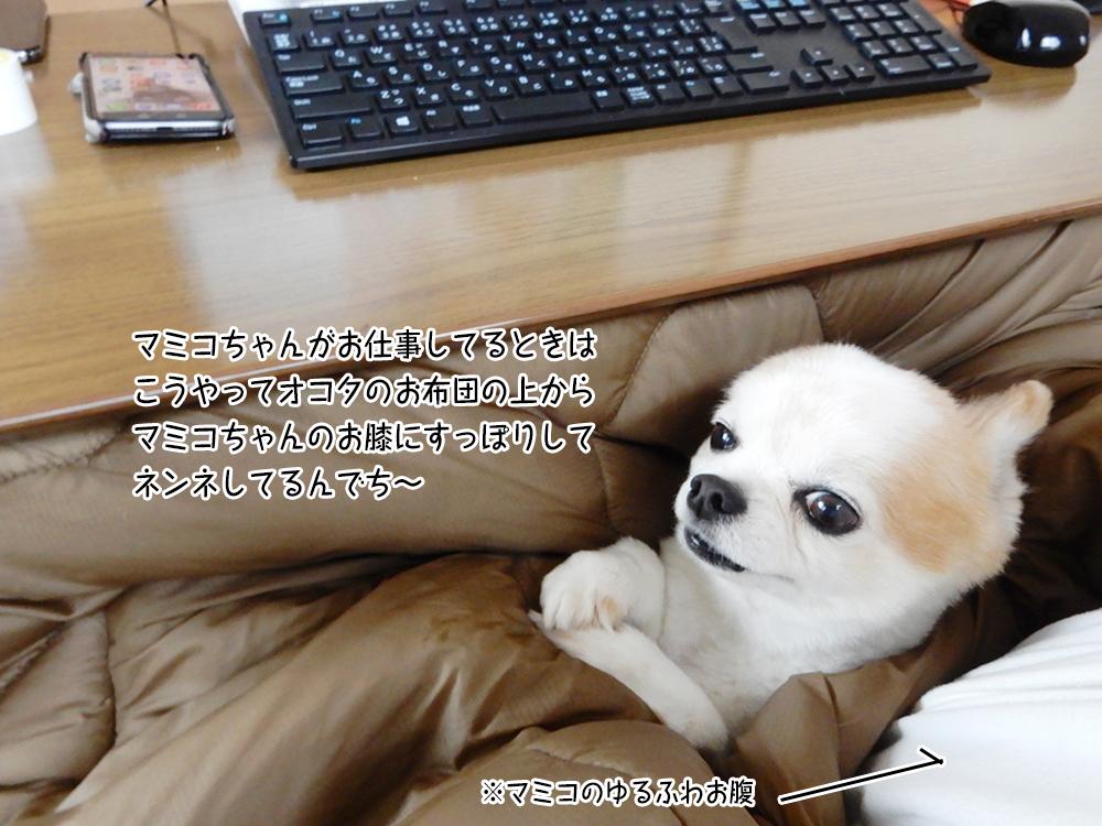 マミコちゃんがお仕事してるときは こうやってオコタのお布団の上から マミコちゃんのお膝にすっぽりして ネンネしてるんでち~