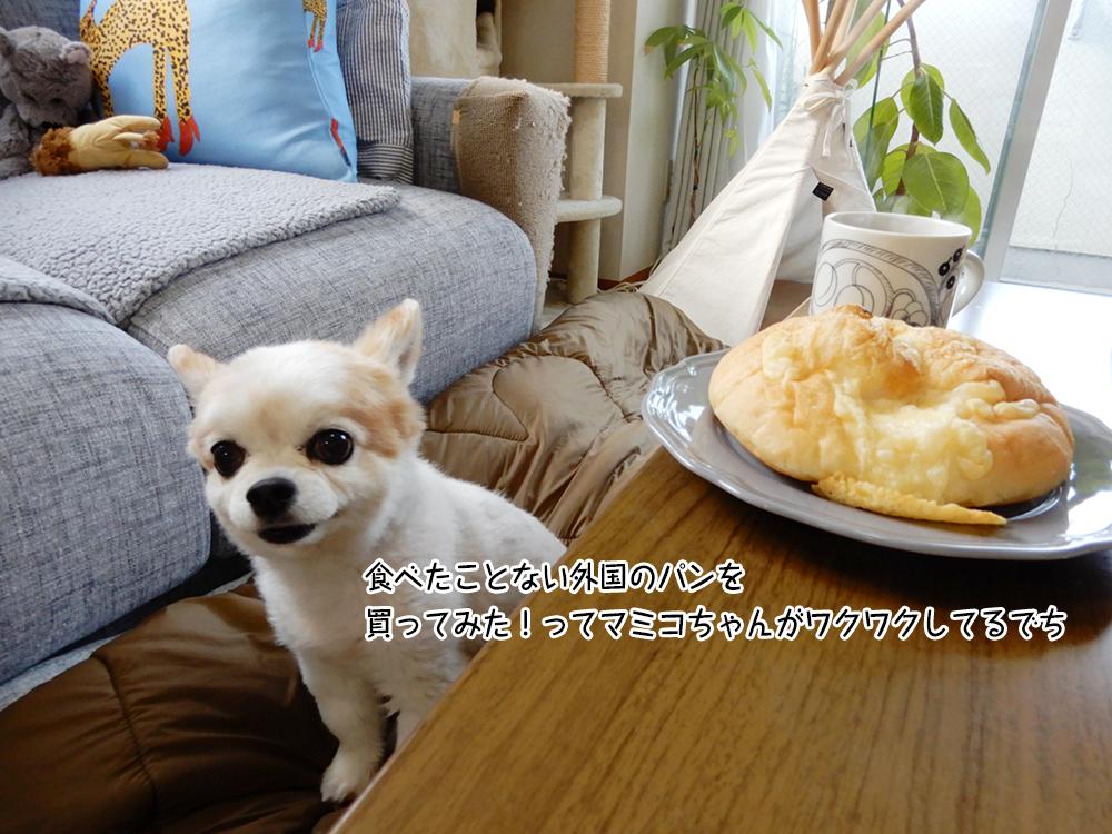 食べたことない外国のパンを 買ってみた!ってマミコちゃんがワクワクしてるでち